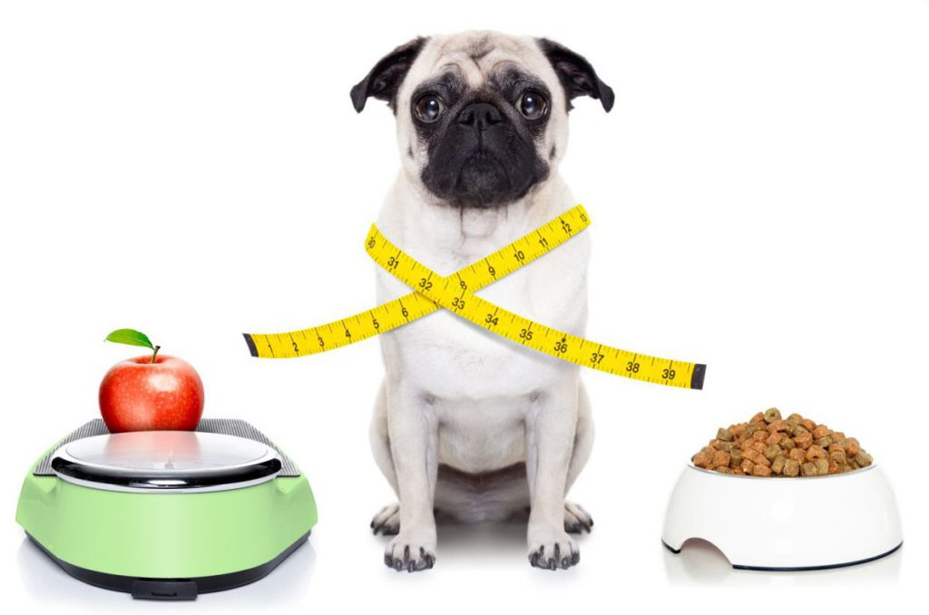 dogs and diet