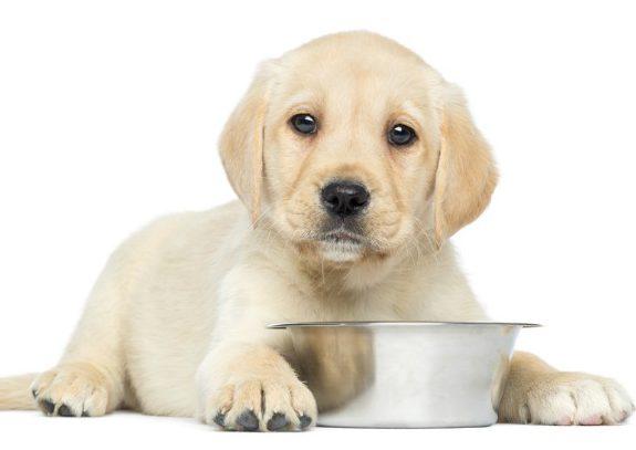 puppy-dog-food