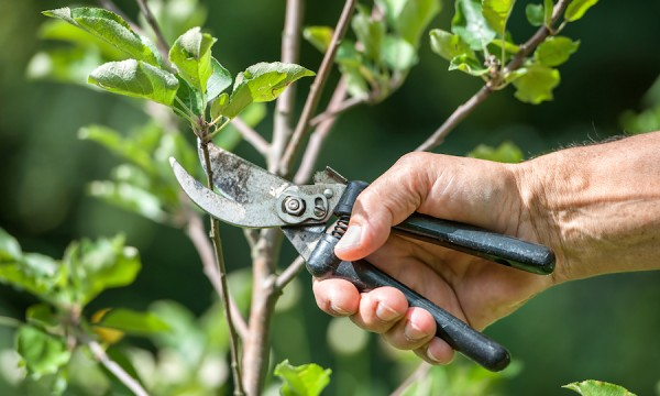 Pruning-of-trees