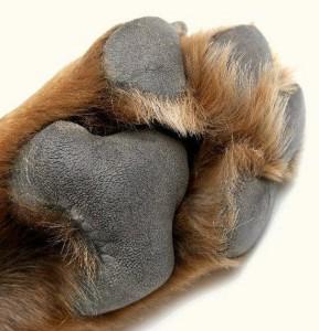 Padding-paw-care