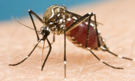 SA scientists design a novel formula that repels and kills mosquitoes