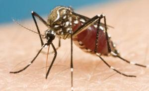 SA scientists design a novel formula that repels and kills mosquitoes