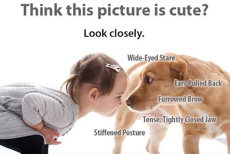 dog-bite-prevention