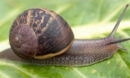 GARDENING, on the snail trail