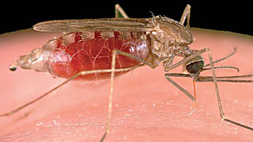 Reasons we still haven't gotten rid of malaria - GoSouth