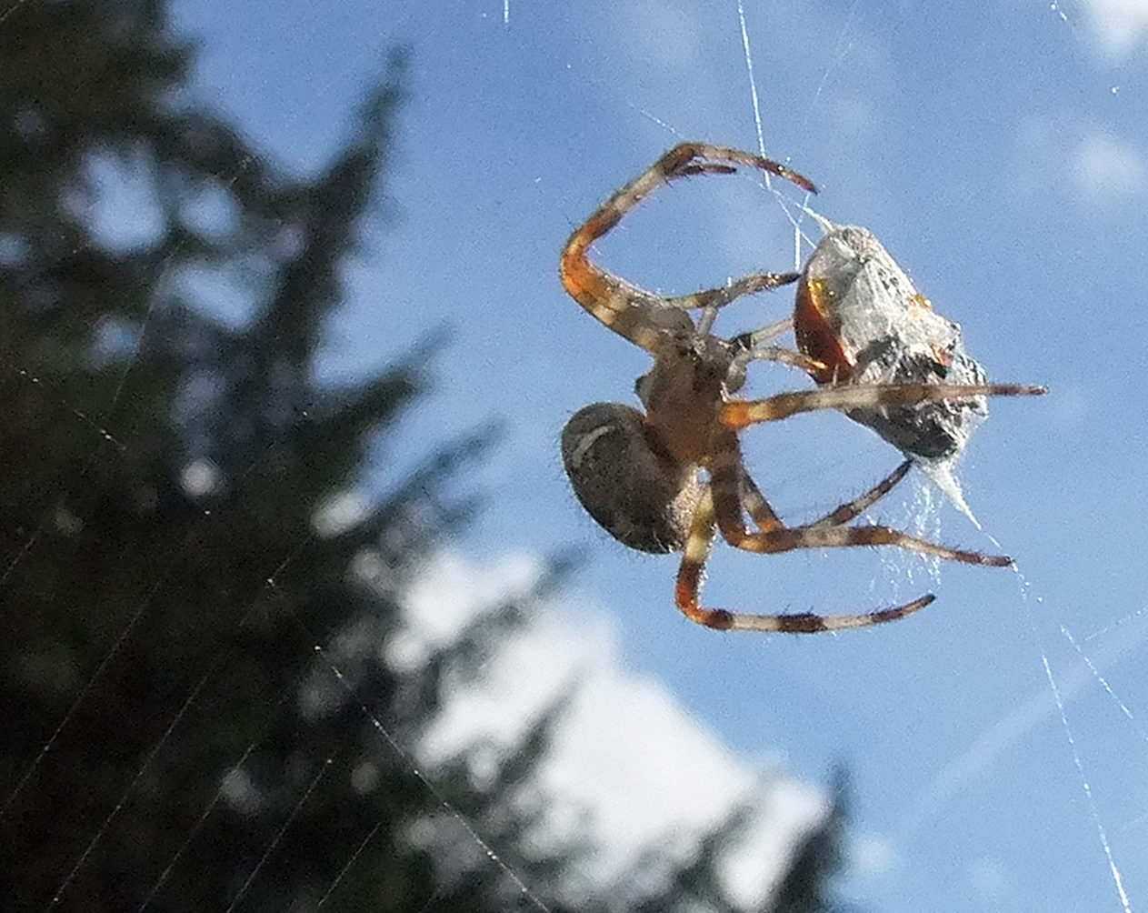 Why we can t spin silken yarn as strong as a spider can for What do we use silk for