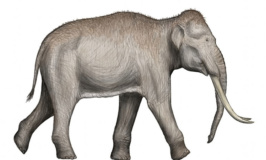 Ancient DNA changes everything we know about the evolution of elephants